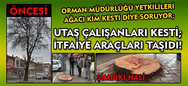 Asırlık Çınar ağacı kesildi, vatandaş Belediye yönetimine veryansın etti!