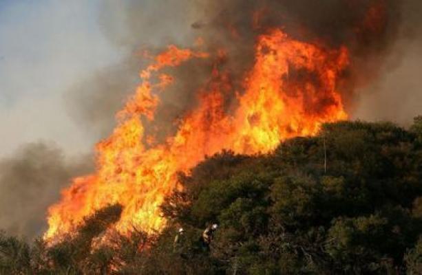 Banaz'da da Orman Yangını Çıktı!