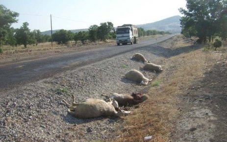 Eşme'de Kamyonun Çarptığı Koyunlar Telef Oldu.