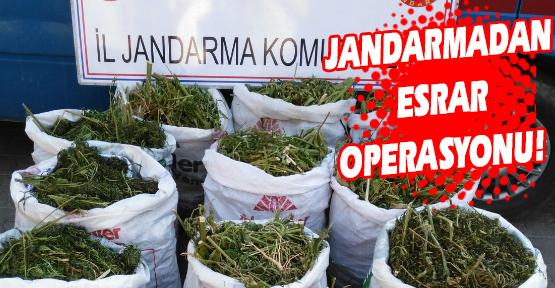Jandarma Ekipleri, 140 Kilo Esrar Yakaladı!