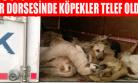 Uşak Belediyesi'nin Tır'la Gönderdiği 300'e Yakın Sokak Köpeğinden Çoğu Öldü!