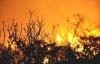 Uşak'ta Yine Orman Yangını! 2 Hektarlık Alan Yandı!