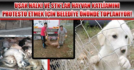 Uşak Belediyesi'ne Adeta Katledilen Köpeklerle İlgili Tepkiler Sürüyor!