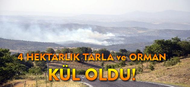 Uşak'ta 4 hektarlık alan yandı!