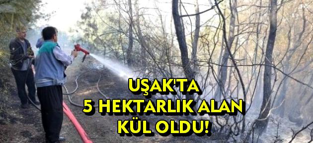 Uşak'ta çıkan orman yangınında 5 hektarlık alan kül oldu!