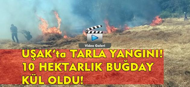Uşak'ta tarla yangını! 10 hektarlık buğday tarlası kül oldu!