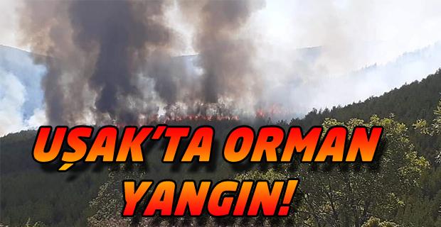 Uşak'taki Ciğerdede Köyü Yakınlarında Yangın!