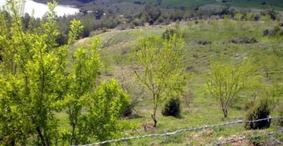 Karaağaç Köyü'ne Ait Bademliğin Şahsa Kiralandığı İddiası Köylünün Tepkisine Neden Oldu!