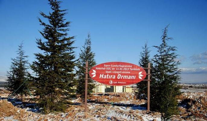 Karaağaç Mahallesi'ndeki Hatıra Ormanına Abdullah Gül'ün İsmi Verildi!
