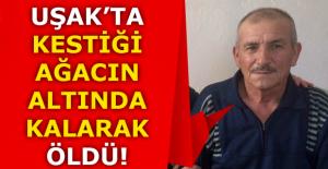 Uşak'ta kestiği ağacın altında kalan adam öldü!