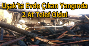 Uşak'ta Çevre Köyün'de çıkan yangında 2 at telef oldu!